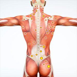 筋膜の概要